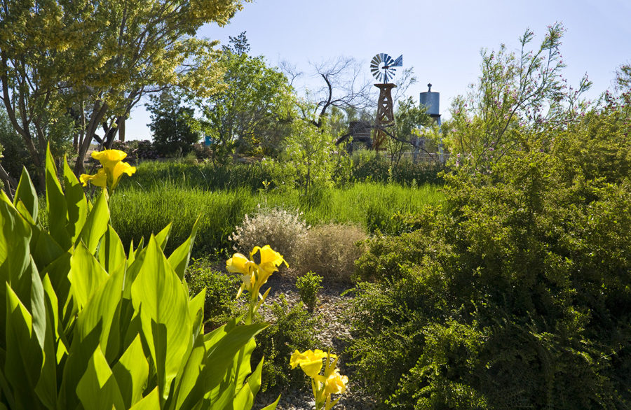 A picture of the gardens near the Waterworks Facility at the Springs Preserve.
