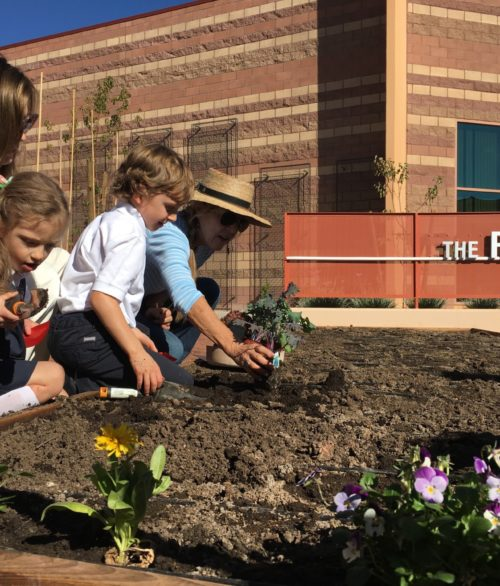 Children planting flowers at the Ruffin Organic Gardens, Alexander Dawson School at Rainbow Mountain.